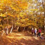 11月6日(火) 山門水源の森ハイキング 山門水源の森の紅葉が最盛期です