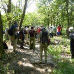 8月18日 山門水源の森ハイキング サギソウ・ハッチョウトンボに会えるハイキング