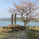 余呉湖・高時川周辺の桜や風景