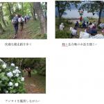 JRふれあいハイキング報告 西野水道~賤ヶ岳縦走し余呉湖アジサイ鑑賞