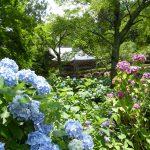 7月10日 JRふれあいハイキング  新緑の参道に涼を求めて 静寂の鶏足寺・石道寺の参道を歩く